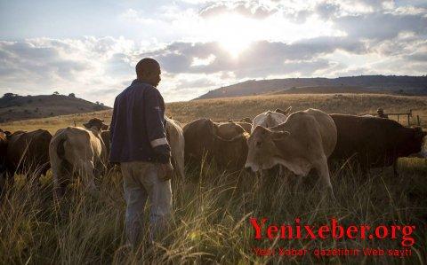 Bu ölkədə 70 fermer öldürülüb